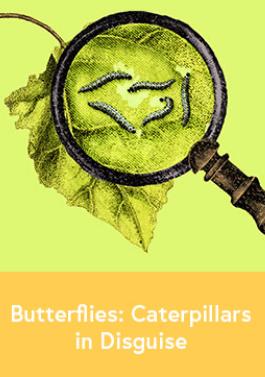 Butterflies: Caterpillars in Disguise-image