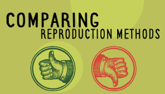 Year 8 - Comparing Reproduction Methods Presentation-image