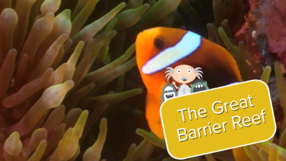 The Great Barrier Reef-video